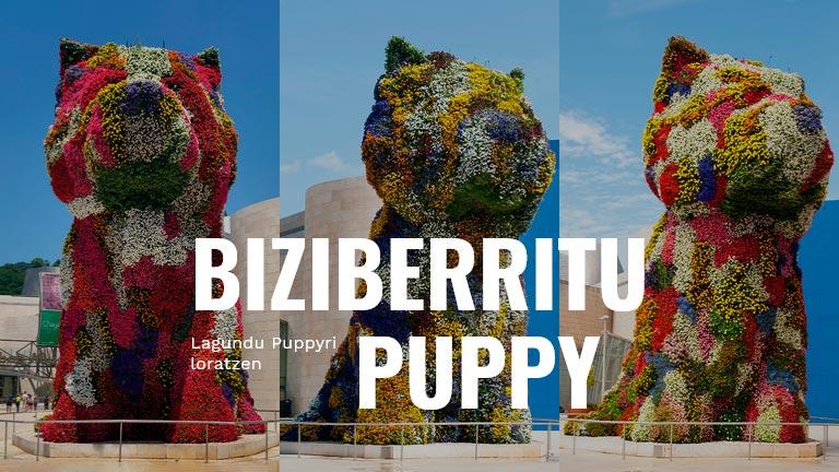 biziberritu puppy