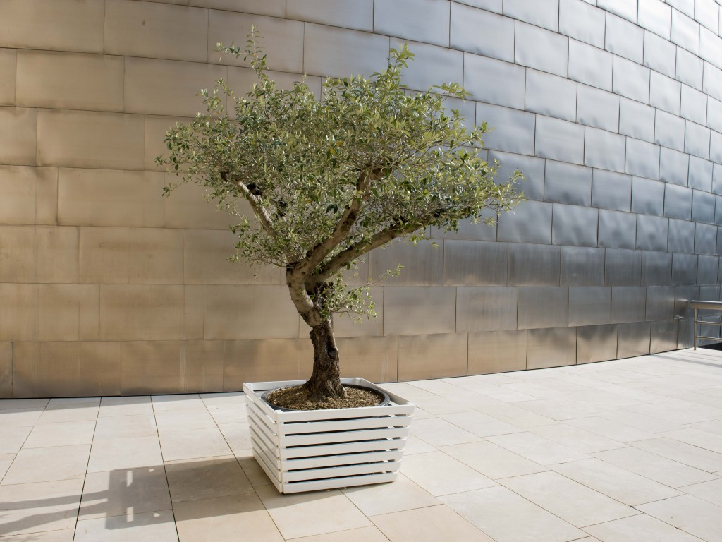 Wish tree for Bilbao | Yoko Ono | Guggenheim Bilbao Museoa