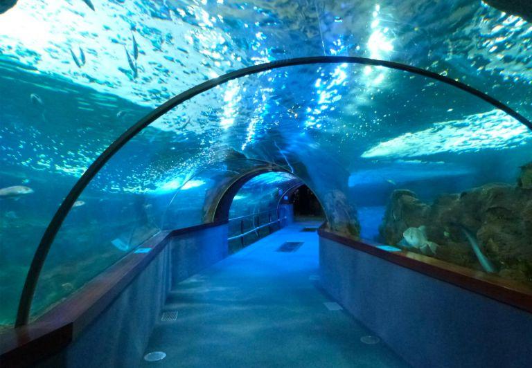 Aquarium, Donostia-San Sebastián