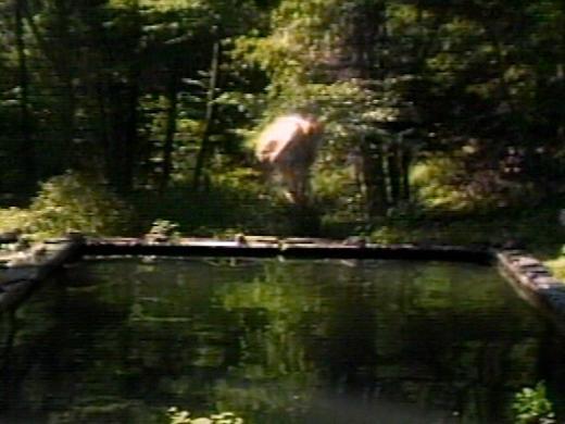 El estanque reflejante