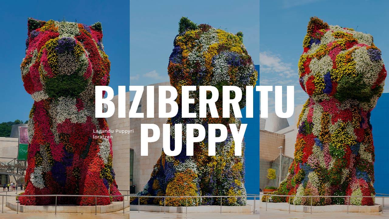 puppy_eu
